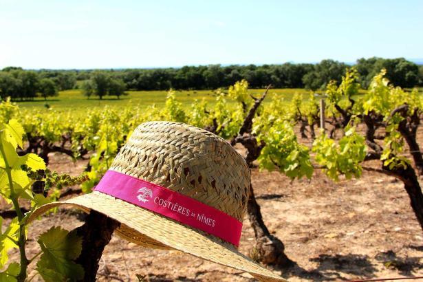 Costières de Nîmes célèbre les vignerons avec le festival Toqué !