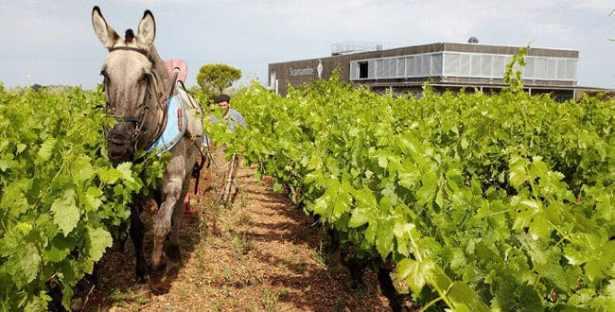 Les Vignes du Domaine de Scamandre
