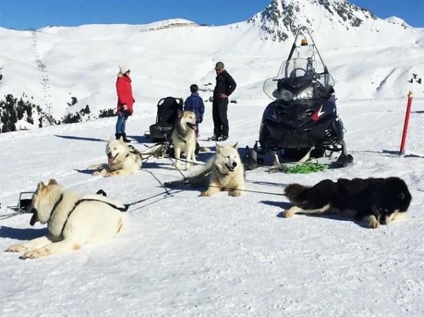activites-hors-ski-la-plagne-traineau-chien
