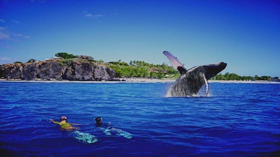 Voir les baleine à bosse de La Réunion