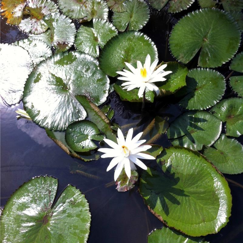 Kampung Naga: Something white, green, wonderful and something to come back to