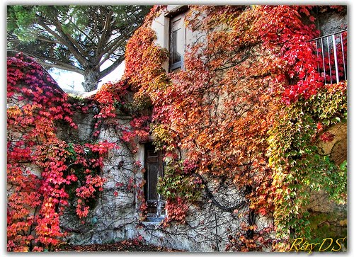 Ivy Covered Walls, Ravello, Italy
