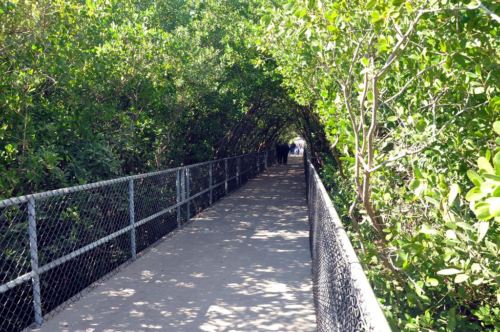The boardwalk at Apollo Beach Manatee Viewing Center