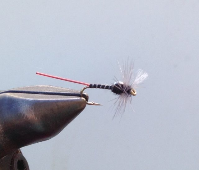 Killer Midge Dry Fly Pattern for the Cache La Poudre and Big Thompson