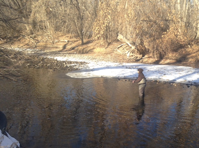 Fly Fishing the Poudre River in Town