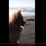 タテ動画ヨコ動画 - 広告生活