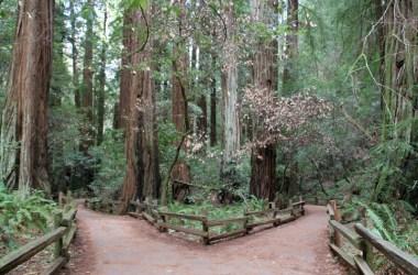 En vei gjennom en skog deler seg i to. Foto: Amy Lenzo CC.BY.NC.SA.