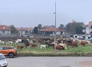 vacche-abusive-mesero-5
