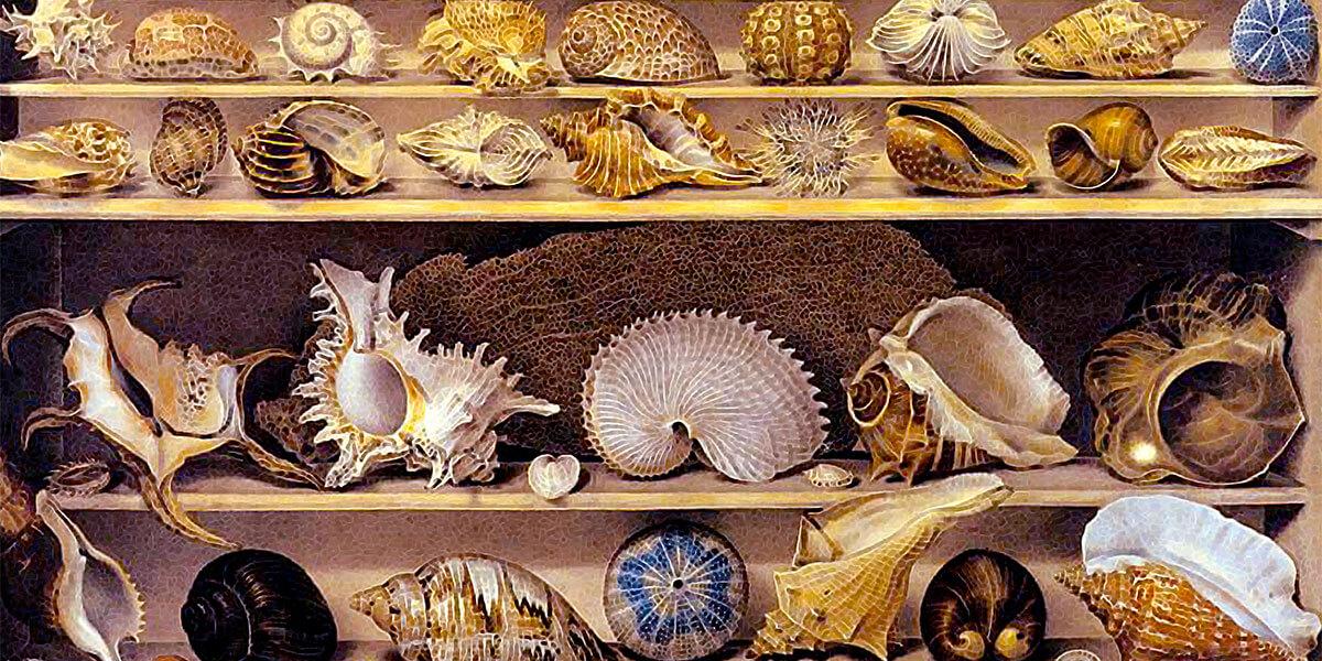 Choix de coquillages. Alexandre-Isidore Leroy De Barde