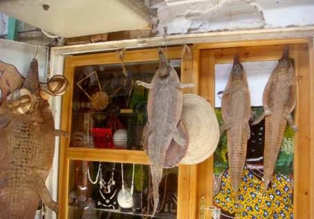 L'interno di uno dei negozi: Da notare la pelle di coccodrillo ed i vari prodotti di avorio in vetrina.