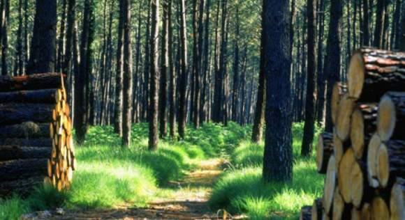 Impôt sur la Fortune immobilière passif déductible : bois & Forêt