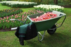 Wheelbarrow full of flower petals from a full day of gardening.