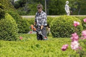Landscape gardener with trimmer in hand working on trimming a hedge.
