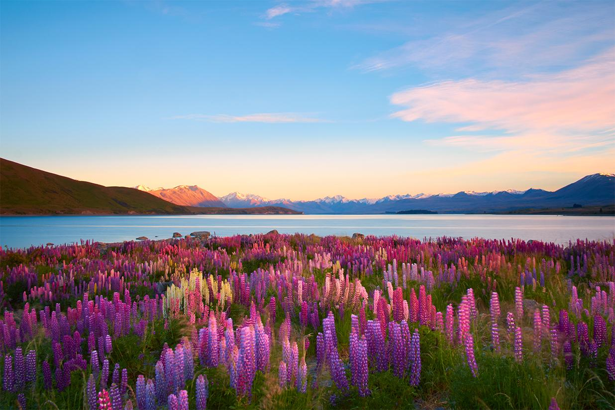 New Zealand Vacation Packages With Airfare Liberty Travel