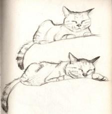 chat-endormi-croquis