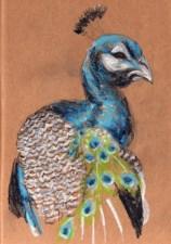 etude-paon-libou