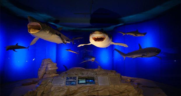 prirodoslovni muzej rijeka