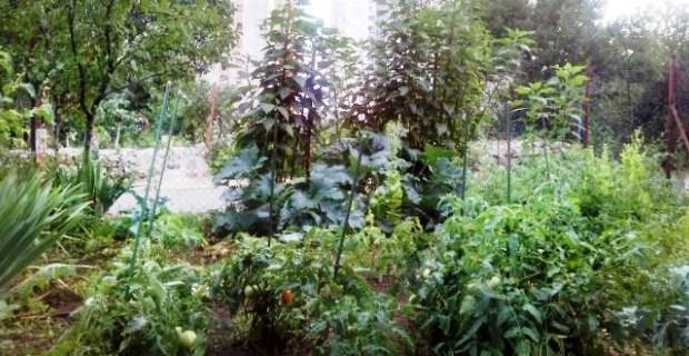 vrtlarska radionica