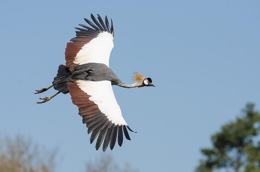 Weltvogelpark Walsrode  Aus Licht gezaubert