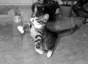 Katze Wittgenstein