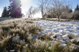 Zwergstrauchheide auf der 36 Hektar umfassenden Hochheide-Landschaft
