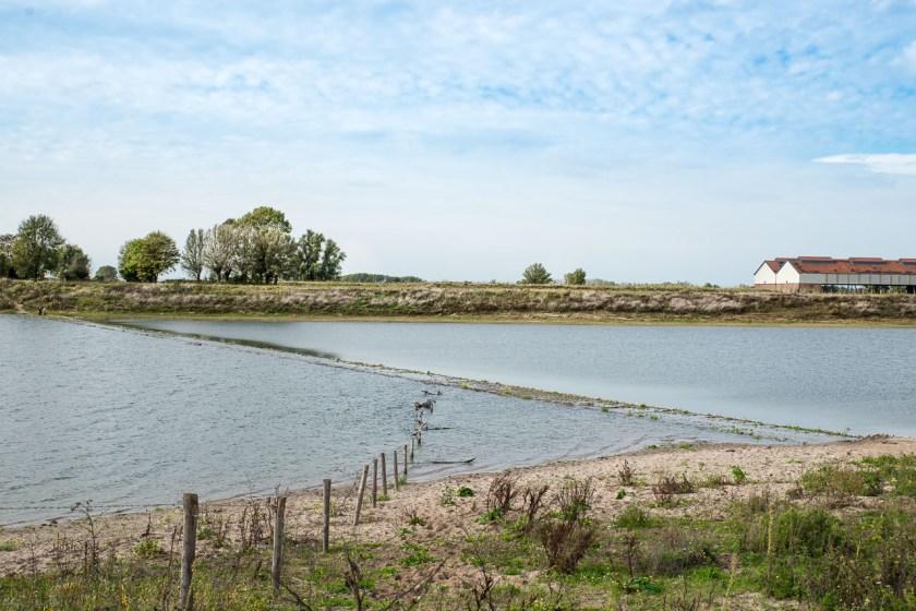 Dieser Fahrrad- und Wanderweg in der Millingerwaard, steht regelmäßig unter Wasser