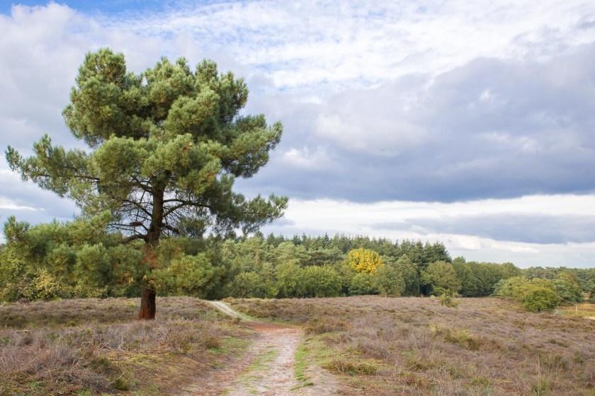 Sandige Böden und viel Heide