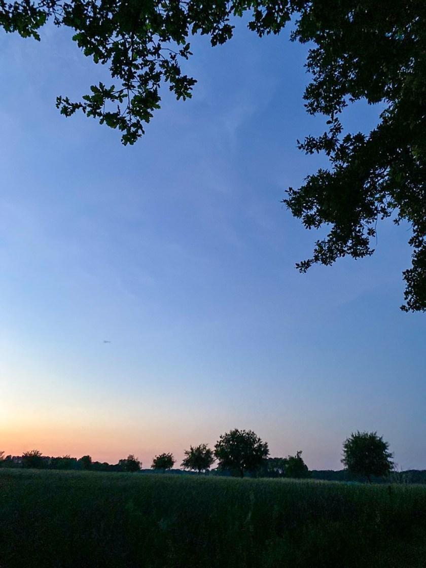 Viele Feldermäuse flattern durch den nächtlichen Himmel