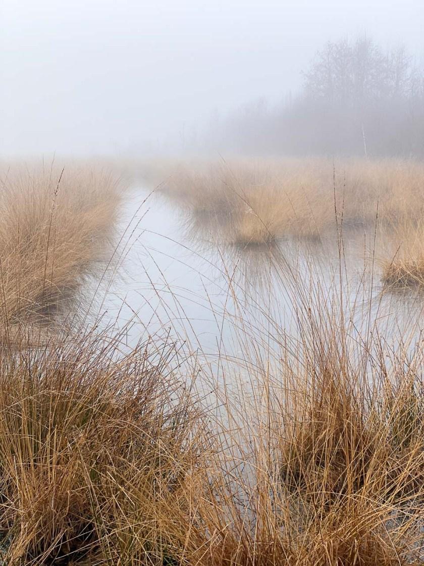 Hochmoore wie das Haaksbergerveen werden ausschließlich regenwasserernährt