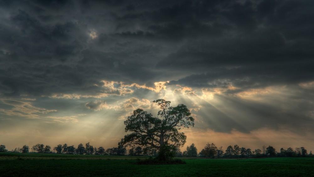 tree_in_a_meadow