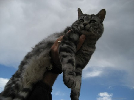 The Immaculate Kitty, 2008 in Del Norte CO