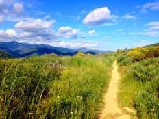 Camino image