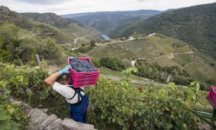 Ventas nacionales de vino de la Ribeira Sacra a toda marcha