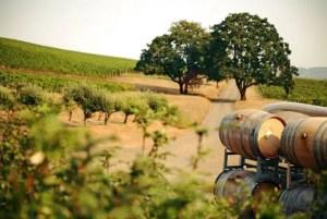 Roble americano en la producción de vino