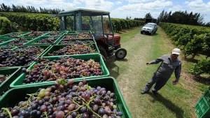 Canelones-Uruguay-rutas del vino