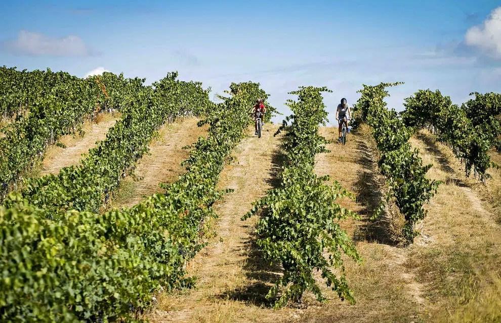 Ruta del Vino de Navarra recibe reconocimiento nacional