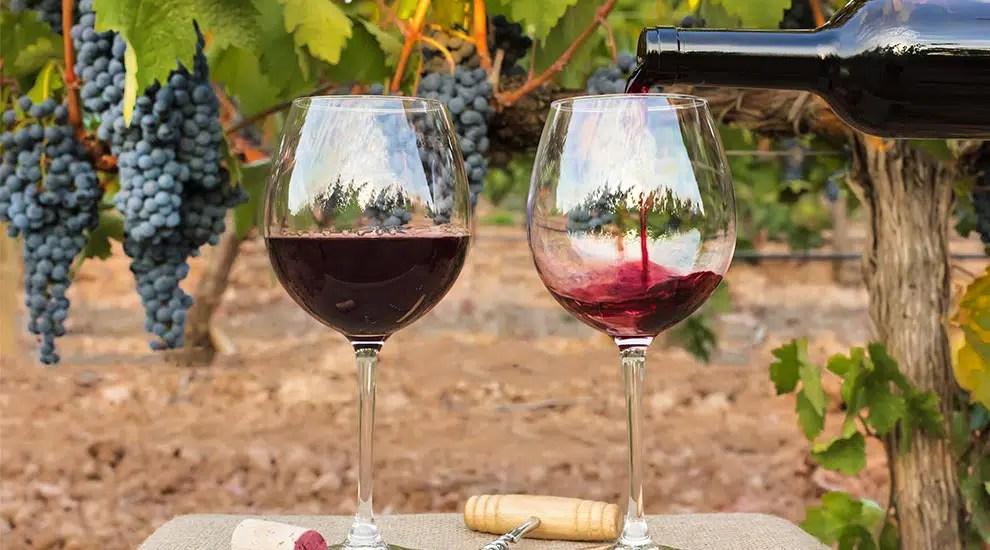 Ribera del Duero: 5 vinos que sorprenden