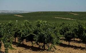 El Norte de Castilla La cosecha de 2018 de la DO Rueda recibe la calificación de «muy buena»