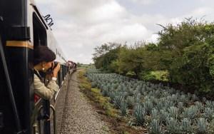 El Tren del Tequila