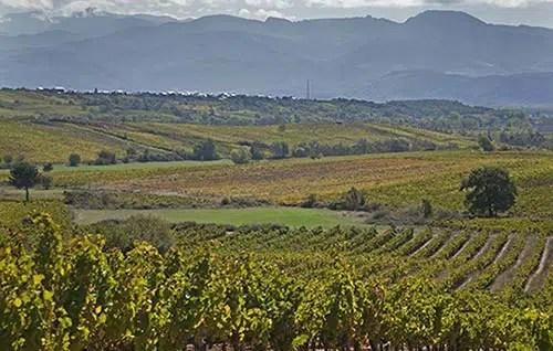 DO Bierzo reporta una caída del 14, 8% de las ventas de sus vinos