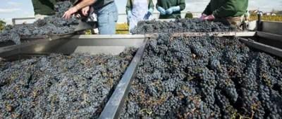 vinos de burdeos