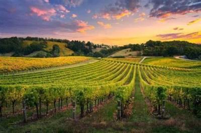 vinos australianos