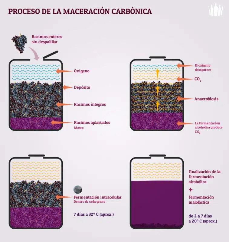 Fermentación del vino