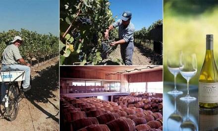Vino orgánico: la experiencia de Viña Cono Sur