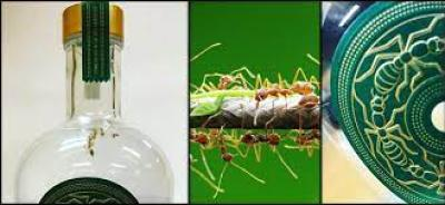 Las hormigas verdes