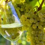 Vinos Moscato: 3 propuestas y un día de celebración