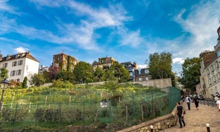 Viñedos urbanos: buen vino en terrazas de 45 metros cuadrados