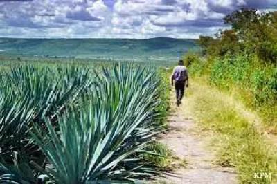 tequila Tepozán