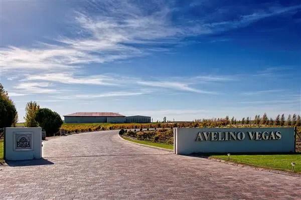 Avelino Vegas: 4 vinos exclusivos,perfectos para presumir