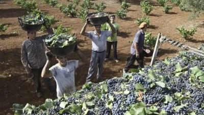 exportaciones de vino